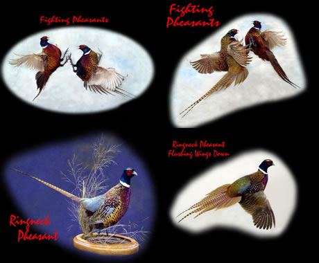 Artistic Compositions Taxidermy